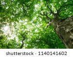 forest trees. nature green wood ... | Shutterstock . vector #1140141602