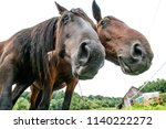 two curious old horses looking... | Shutterstock . vector #1140222272