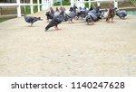 pigeon in park. | Shutterstock . vector #1140247628