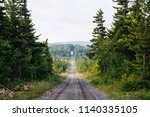 a dirt road and pine trees in...   Shutterstock . vector #1140335105