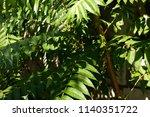 green fern palm leaves ... | Shutterstock . vector #1140351722
