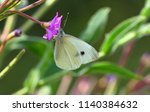 small white butterfly female | Shutterstock . vector #1140384632