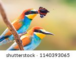 pair of exotic bird with a... | Shutterstock . vector #1140393065