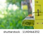 bees in a beehive on a sunny day | Shutterstock . vector #1140466352