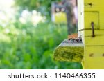 bees in a beehive on a sunny day | Shutterstock . vector #1140466355