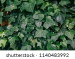 a wall of common ivy. usable as ... | Shutterstock . vector #1140483992