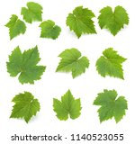 collection of green grape... | Shutterstock . vector #1140523055
