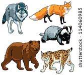 set of animals wild predators... | Shutterstock .eps vector #114060985