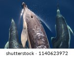 group of common dolphins from... | Shutterstock . vector #1140623972