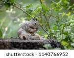 ground squirrel on tree stump... | Shutterstock . vector #1140766952