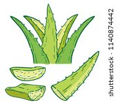 hand drawn illustration of aloe. | Shutterstock .eps vector #1140874442