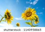 a bee on a bright yellow... | Shutterstock . vector #1140958865