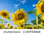 gorgeous sunflowers on a bright ... | Shutterstock . vector #1140958868