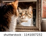 Stock photo a well groomed cat looks at himself in the mirror 1141007252