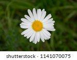 daisy flower on green grass... | Shutterstock . vector #1141070075
