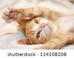 Stock photo cute playful orange kitten 114108208