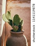 paddle cactus in a ceramic pot... | Shutterstock . vector #1141119878