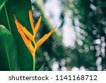 orange tropical exotic flowers... | Shutterstock . vector #1141168712