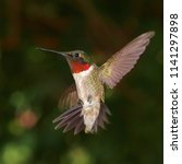 Male Ruby Throated Hummingbird...