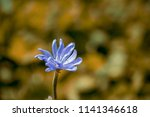 one wild flower of blue color... | Shutterstock . vector #1141346618