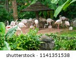 a group of flamingo in the zoo | Shutterstock . vector #1141351538