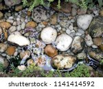 Various Pebble River Stone In...