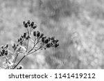 branch or bunch of wild prickly ... | Shutterstock . vector #1141419212