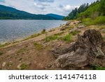 old  dry trunk near a sea   dam ... | Shutterstock . vector #1141474118