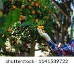 close up of farmer hand with... | Shutterstock . vector #1141539722