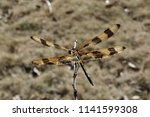 Dragonfly On A Stick And You...