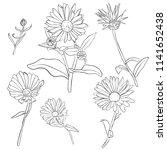 vector set of drawing calendula ...   Shutterstock .eps vector #1141652438