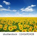sunflowers field on sky... | Shutterstock . vector #1141692428