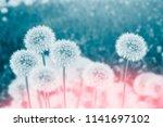fluffy dandelion flower against ...   Shutterstock . vector #1141697102