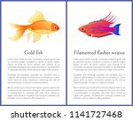 filamented flasher wrasse and... | Shutterstock .eps vector #1141727468