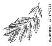 branch of plant vector... | Shutterstock .eps vector #1141747388