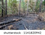 burned piece of forest in the... | Shutterstock . vector #1141820942