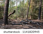 burned piece of forest in the... | Shutterstock . vector #1141820945