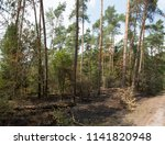 burned piece of forest in the... | Shutterstock . vector #1141820948