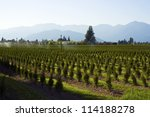 a tree farm is being irrigated... | Shutterstock . vector #114188278