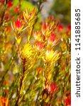 sun seeker flowers absorbing... | Shutterstock . vector #1141885685