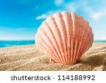 Beautiful Scallops Sea Shell On ...