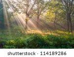 The Bright Sun Rays Shining...