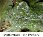 the frozen rain drops. the...   Shutterstock . vector #1141904372