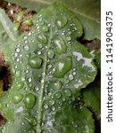 the frozen rain drops. the...   Shutterstock . vector #1141904375