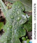the frozen rain drops. the...   Shutterstock . vector #1141904378