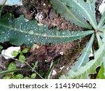 the frozen rain drops. the...   Shutterstock . vector #1141904402