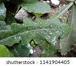 the frozen rain drops. the...   Shutterstock . vector #1141904405