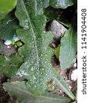 the frozen rain drops. the...   Shutterstock . vector #1141904408