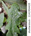 the frozen rain drops. the...   Shutterstock . vector #1141904435