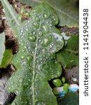 the frozen rain drops. the...   Shutterstock . vector #1141904438
